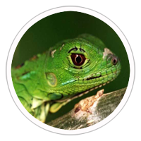 animalerie reptiles chambly